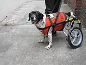咪咪+輪椅:IMG_0684.JPG