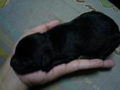 妞妞的小狗仔:照片 007.jpg