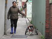 咪咪+輪椅:IMG_0687.JPG