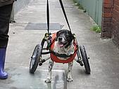 咪咪+輪椅:IMG_0690.JPG