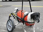 咪咪+輪椅:IMG_0680.JPG