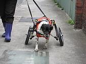 咪咪+輪椅:IMG_0688.JPG