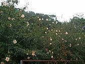 2012/10/28 山線搖滾@龍騰斷橋❤:2012-10-28 14.11.54.jpg