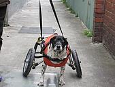 咪咪+輪椅:IMG_0689.JPG
