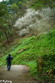 20170108桃源仙谷鬱金香花季:桃源仙谷遊園步道