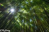 20150906司馬庫斯塔克金溪:司馬庫斯巨木群步道竹林