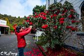 20141029紐西蘭夢幻之旅(三)瓦那卡湖與庫克山踏雪:淘金小鎮-仙蒂鎮