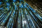 20161210阿里山知性之旅:巨木群森林步道
