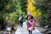 20151016大香格里拉亞丁稻城之旅-2:雙橋溝紅杉林