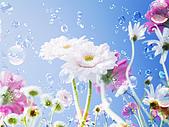 花花世界:花23.jpg