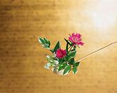 花花世界:小1.jpg