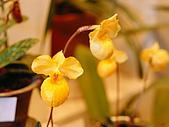花花世界:小2.jpg