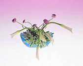 花花世界:小3.jpg