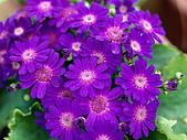 花花世界:小15.jpg