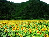 花花世界:葵8.jpg