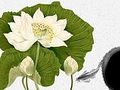 花花世界:花插畫2.jpg