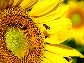 花花世界:葵3.jpg