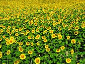 花花世界:葵4.jpg