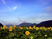 花花世界:葵6.jpg
