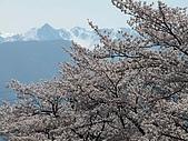 花花世界:櫻3.jpg
