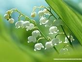 花花世界:玲1.jpg