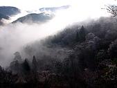 花花世界:櫻4.jpg