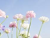 花花世界:花3.jpg
