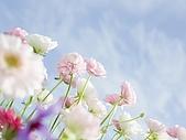 花花世界:花4.jpg