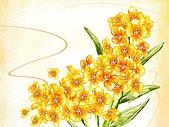 花花世界:花插畫7.jpg