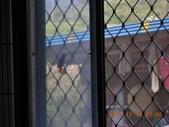 家庭6:闖入鳥朋友 (1) (800x600).jpg