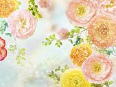 花花世界:花12.jpg