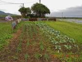 家庭6:菜園 (800x600).jpg