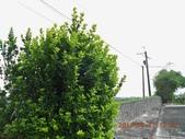 家庭6:新綠 (2) (800x600).jpg
