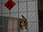 家庭6:闖入鳥朋友 (2) (800x600).jpg
