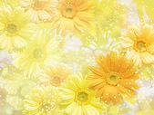 花花世界:花19.jpg