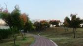 台灣欒樹:P1150496.JPG