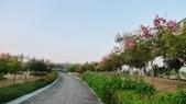 台灣欒樹:P1150526.JPG