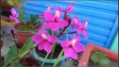 美麗的小花: