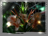 繁花千萬種:橘色野薑花
