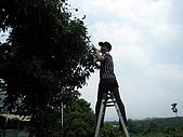 採荔枝:IMG_1786.JPG