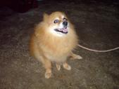 狗:1312492560.jpg