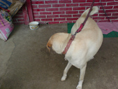 狗:1312492561.jpg