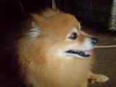 狗:1312492567.jpg