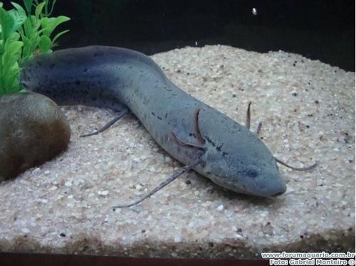画像 : 魚なのに溺れる!?ハイ...