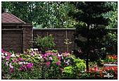 中庭裏的花開了!!:05.jpg
