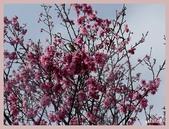 2013陽明山花季:P1050214.jpg