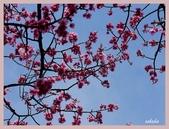 2013陽明山花季:P1050219.jpg