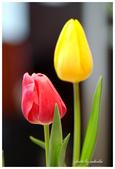 花卉來迎春:DSC_1122.jpg