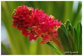 花卉來迎春:DSC_1147.jpg