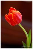 花卉來迎春:DSC_1158.jpg